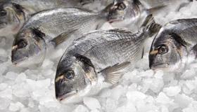 pescherie-arredamento